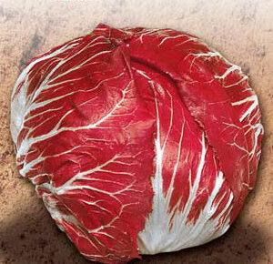 Cicoria Palla Rossa precoce 3 selez Maura