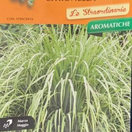CITRONELLA - Lemon grass - pianta perenne