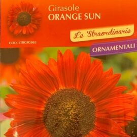 Girasole ORANGE SUN fiori colore arancio chiaro