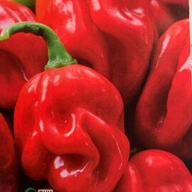 peperone habanero piccante red caribean